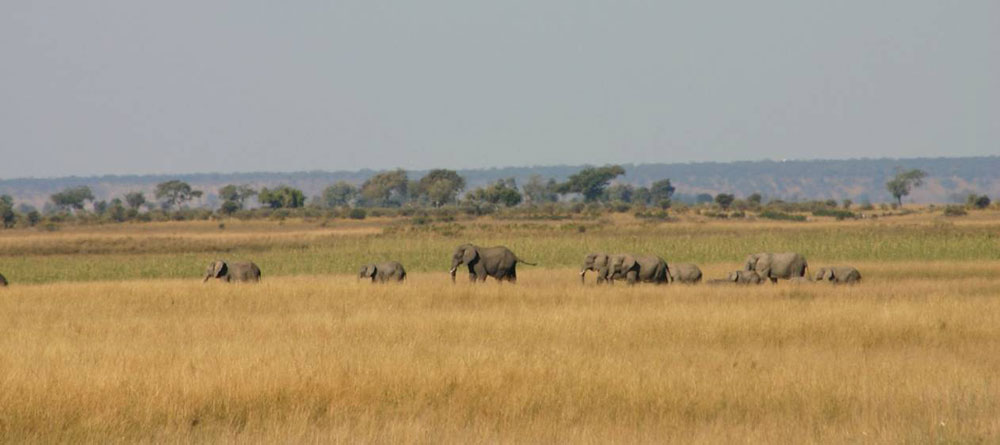 Chobe elephant camp wildlife 14